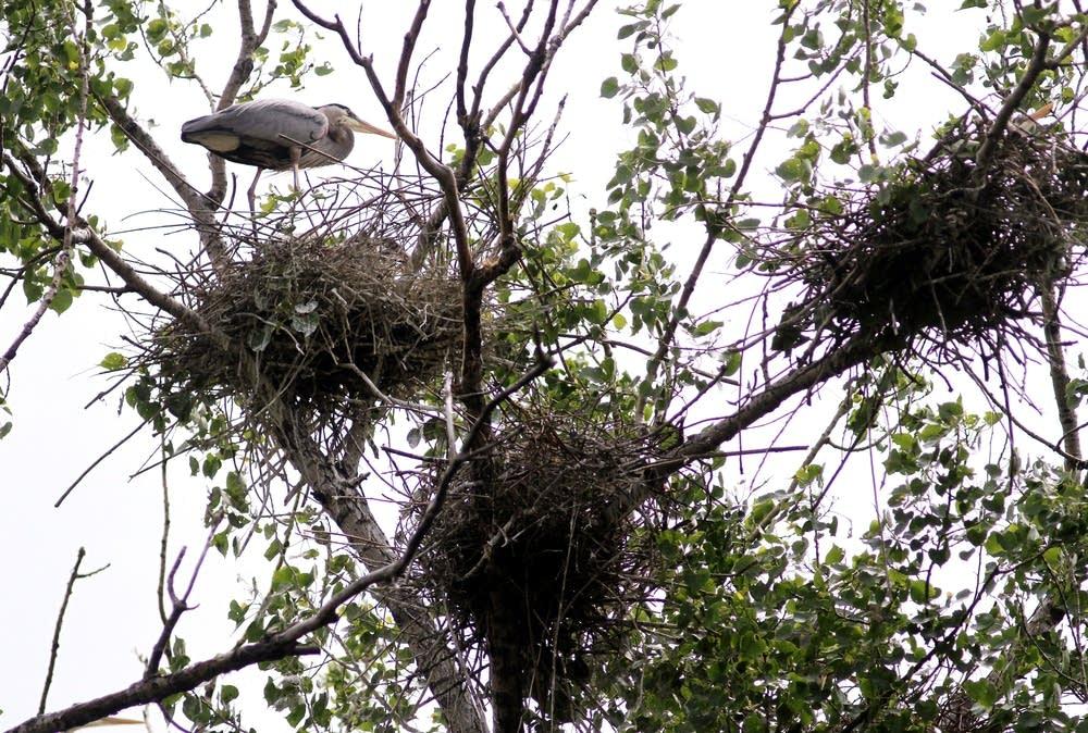 Dozens of nests