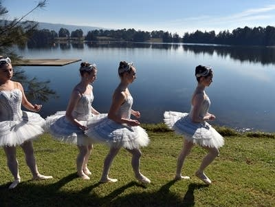 Ca87e2 20160720 swan lake