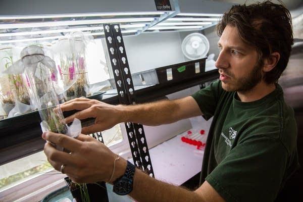 Clayton Burggraff checks on specimens.