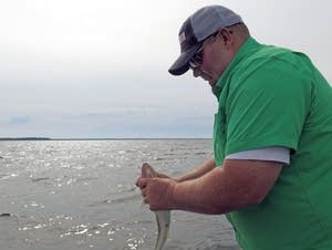 Brian Hammarsten of Minnetrista unhooks a walleye.