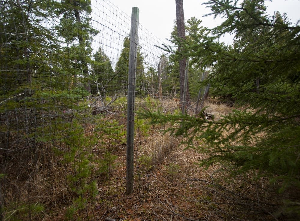 Tree enclosure