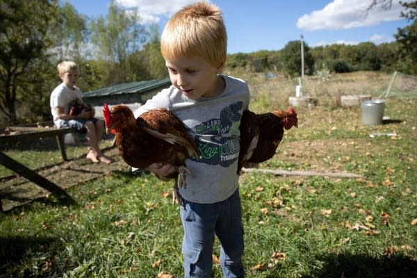 Matthias Millar, 5, foreground, and Sterling Millar, 7, hold chickens.