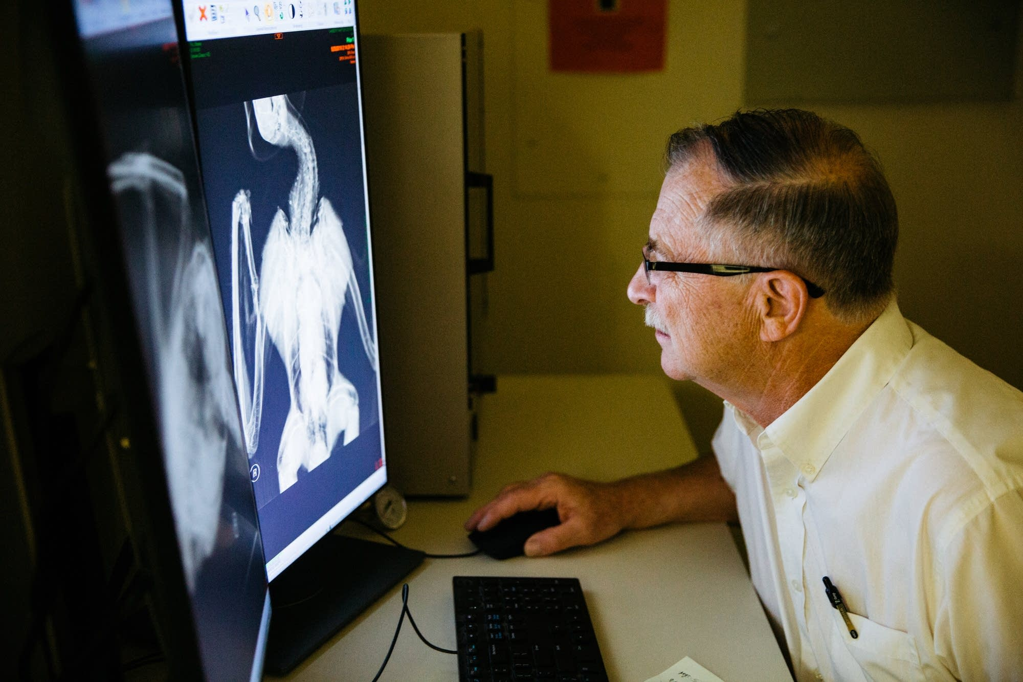 Dr. Patrick Redig looks at x-ray images of a raptor.