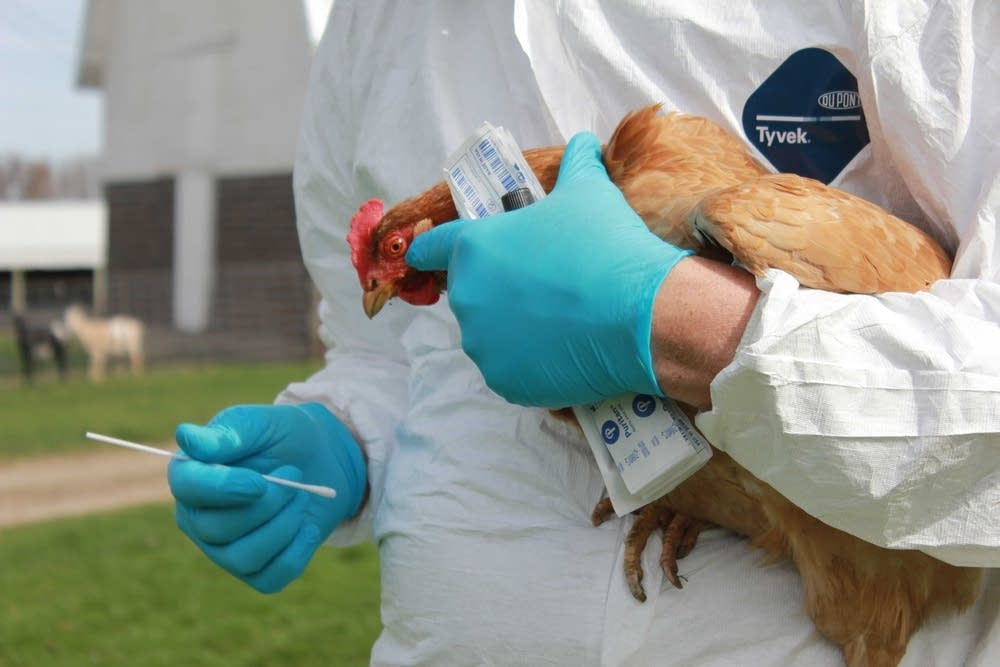 Poultry farmers urged to take precautions after bird flu outbreak