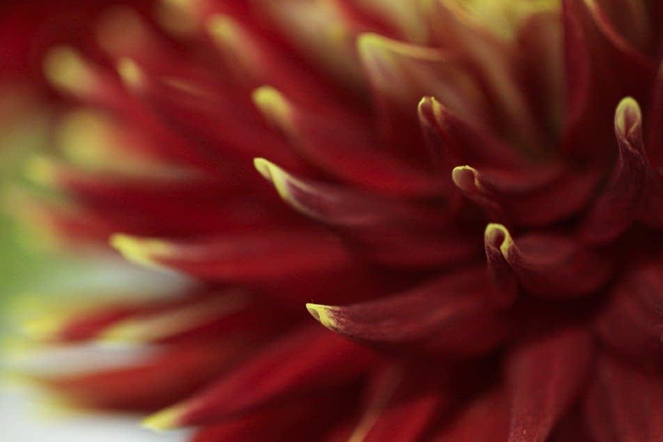 Closeup 5
