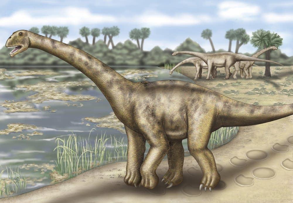 Giant Sauropod