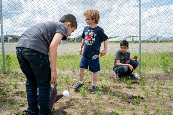 Kids plant milkweed and other pollinator-friendly plants.
