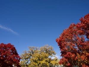 Trees seen from Summit Avenue, St. Paul.