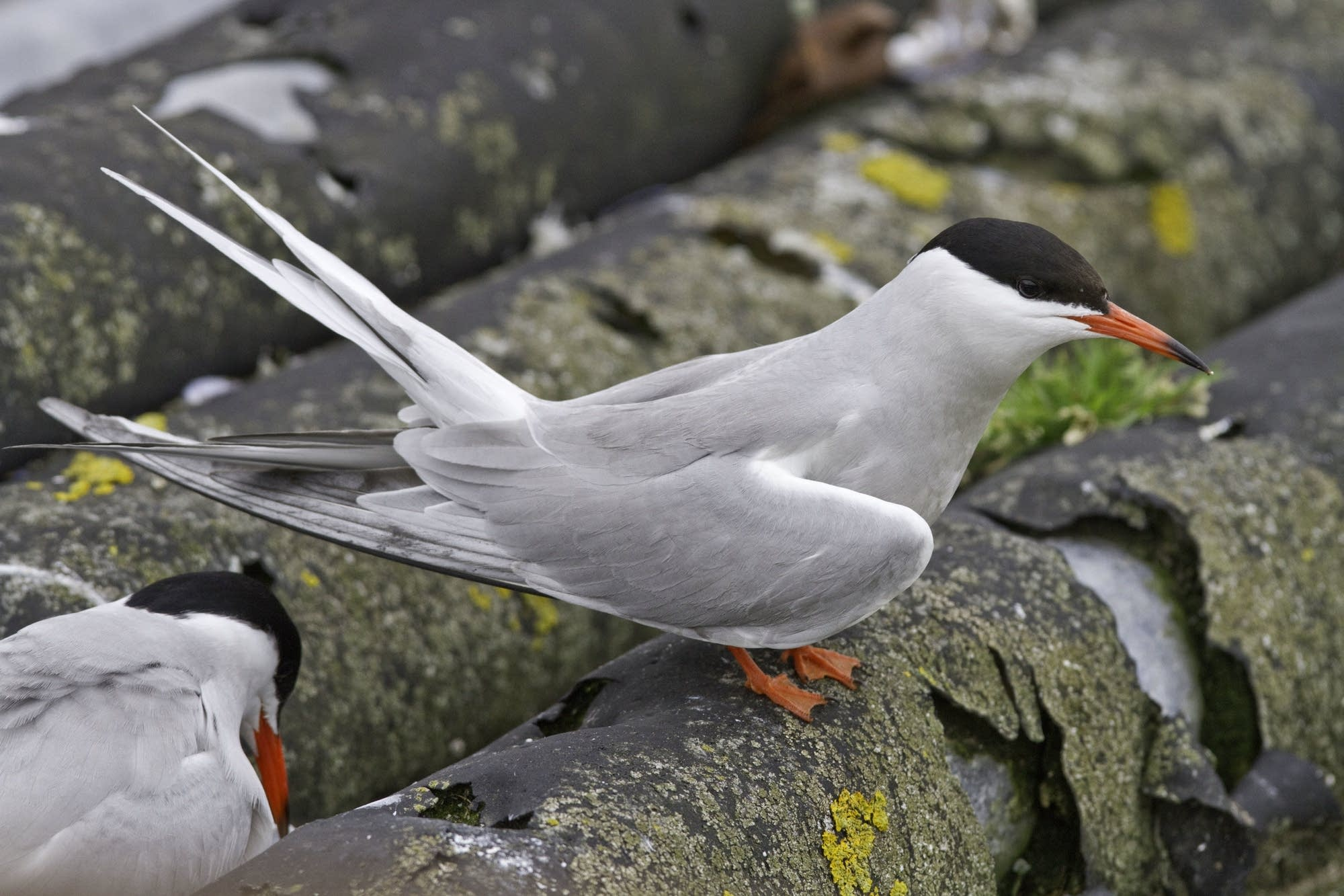 Edinburgh - 31 - Thomas bird 1