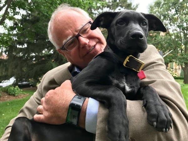 Gov. Tim Walz's dog, Scout