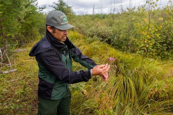 A man examines a plant.