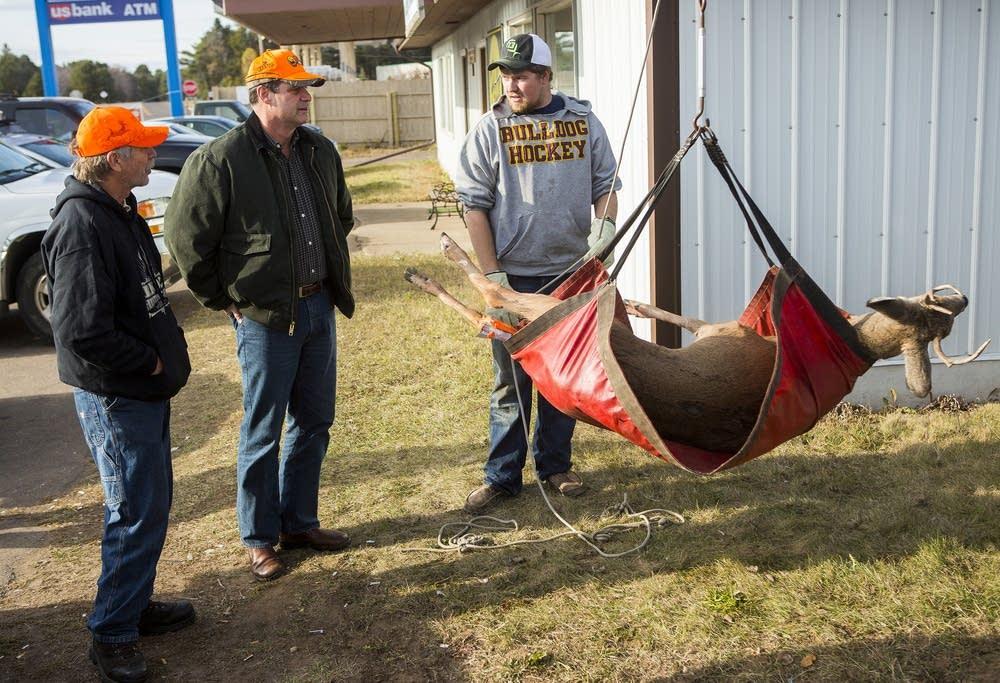 Hanging a deer