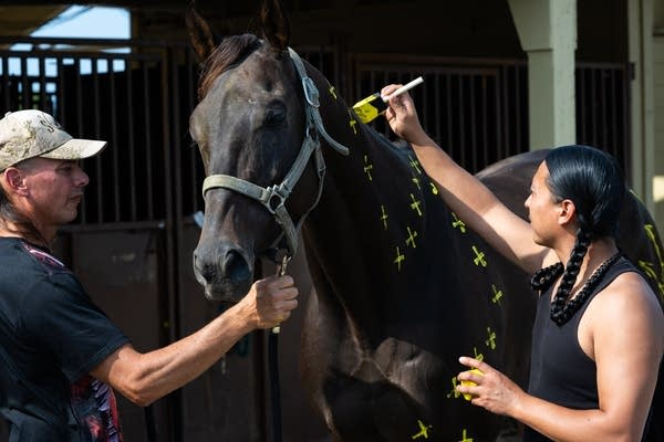 Derek Brown, right, paints one of his father Tim's horses.