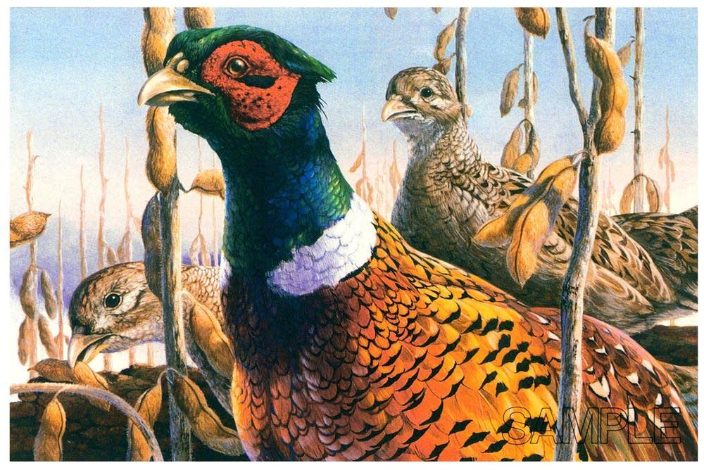 1984 pheasant stamp