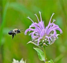 20100528_bumblebee_39