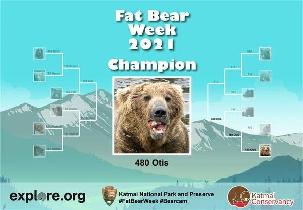"Championship bracket for ""Fat Bear Week 2021"" showing Otis as winner"