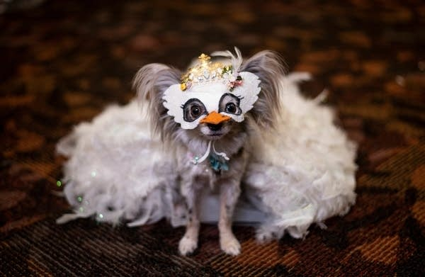 A dog is dressed in a mask and costume