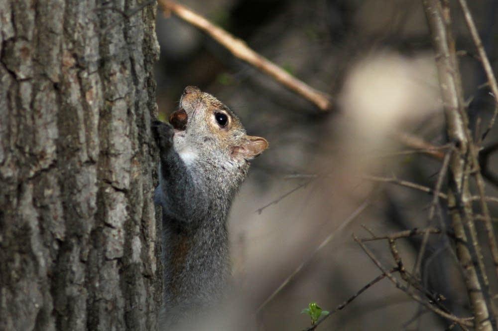 Squirrel food
