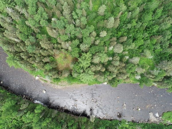 Trees and a stream seen from above