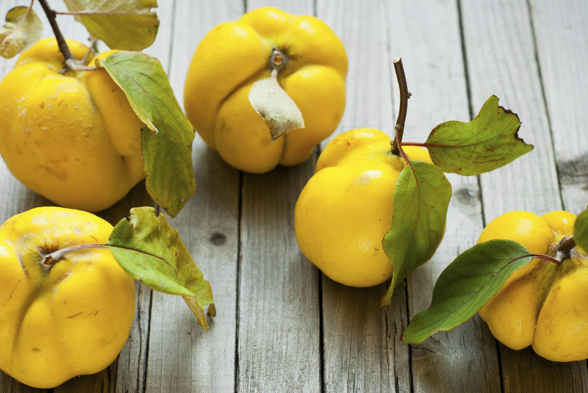 The quince: The fruit that started the Trojan War?   The Splendid Table