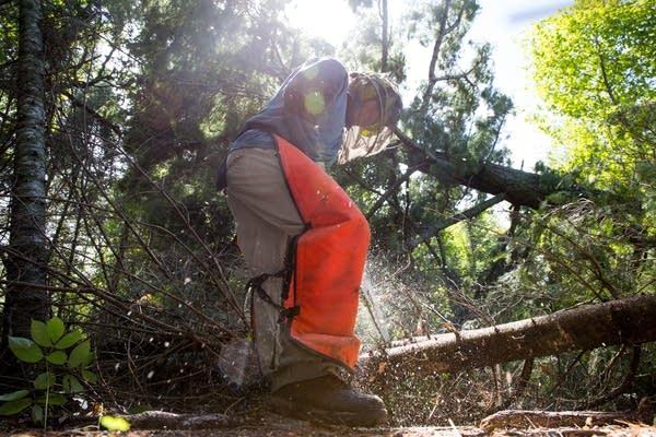Jim Rakness cuts a down tree