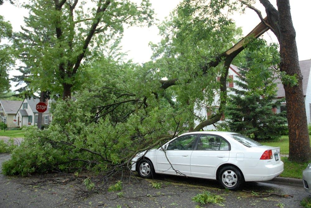 Storm damage in Highland Park