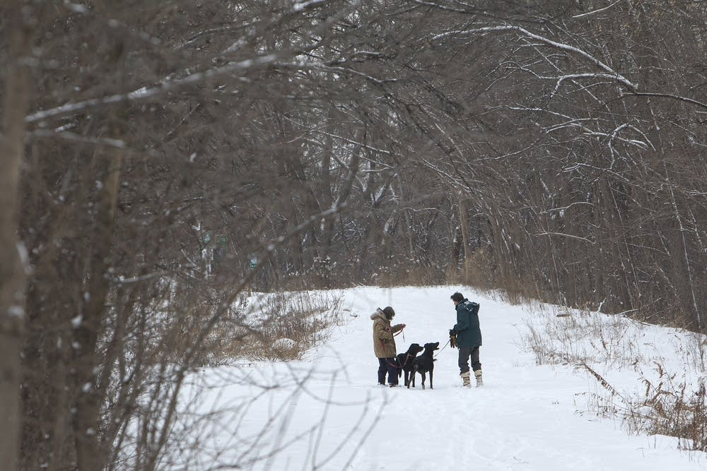 Dog walkers take advantage of the fresh snow.