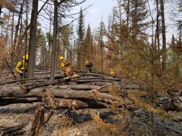 Wildland firefighting crews conduct mop-up work