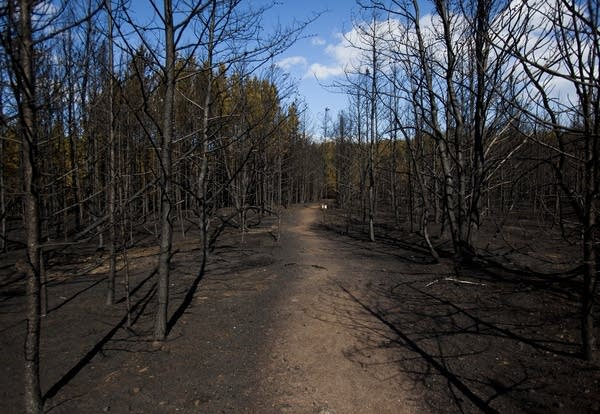 A section of the Boundary Waters Canoe Area Wilderness burned