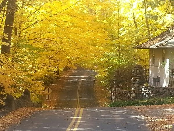 Fall color 2014 2