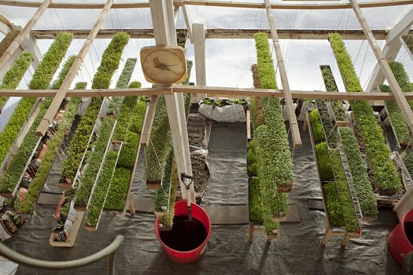 Deep winter' greenhouse grows veggies year-round | MPR News
