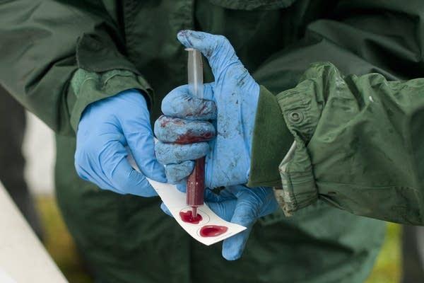 Testing bison blood