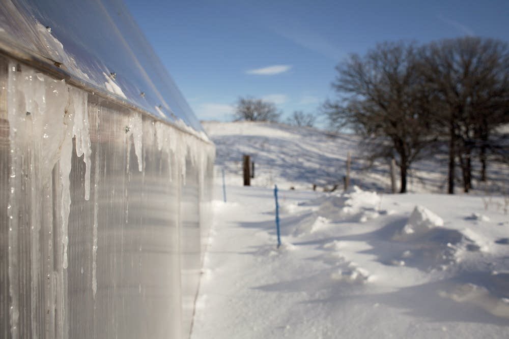 39 Deep Winter 39 Greenhouse Grows Veggies Year Round Minnesota Public Radio News