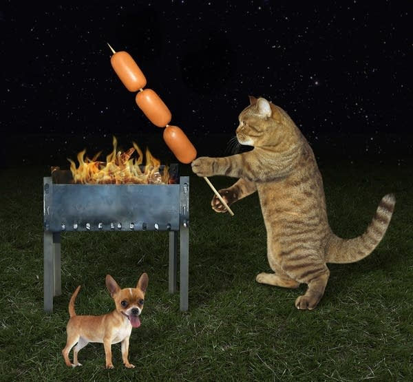 A Getty image of a cat grilling next to a chihuahua?