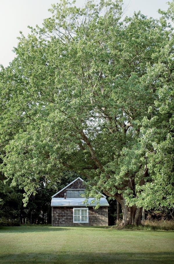 Jackson's studio in high summer, Springs.