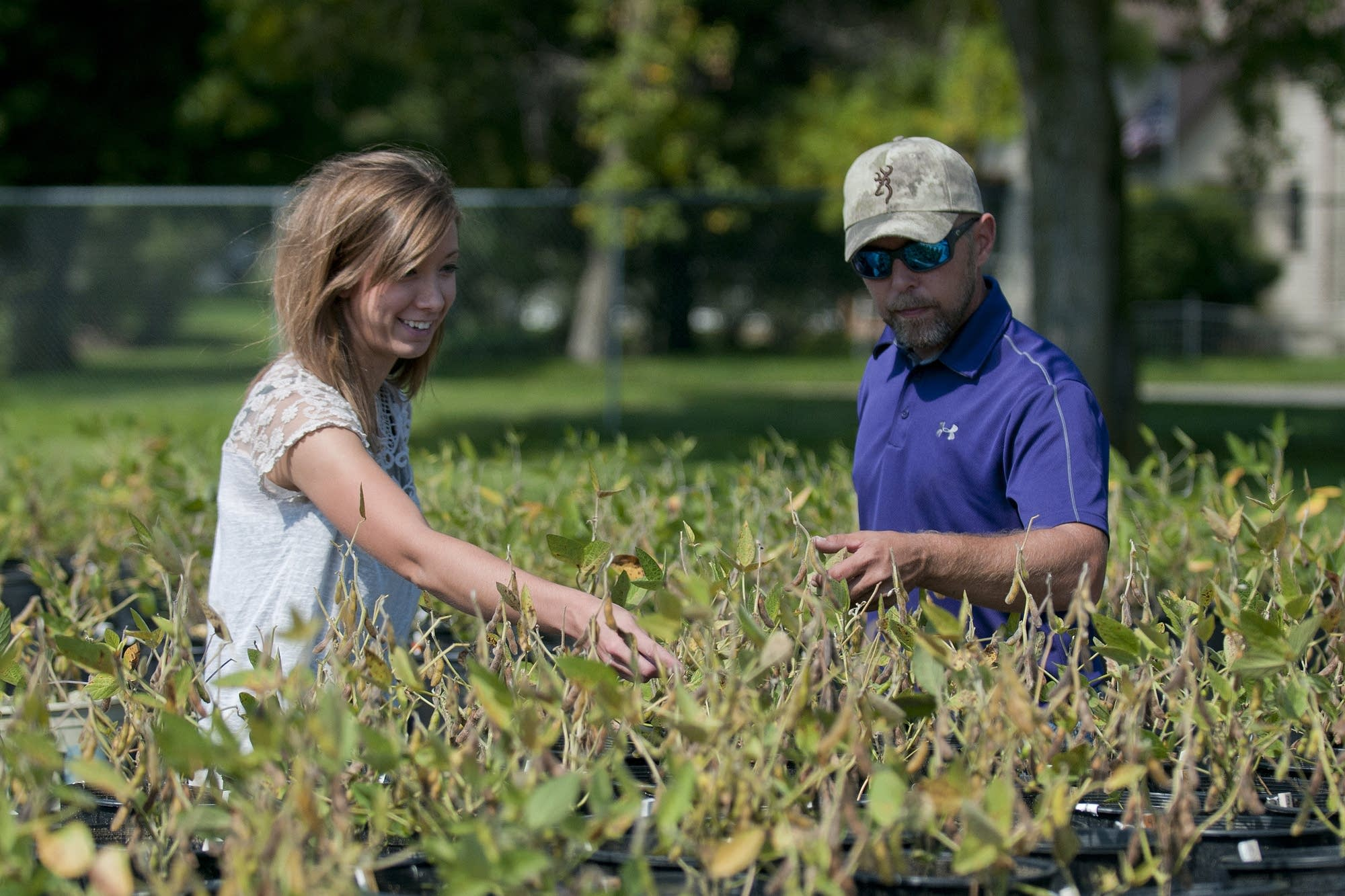 Emma Christensen, Tom Chandler look at soy plants