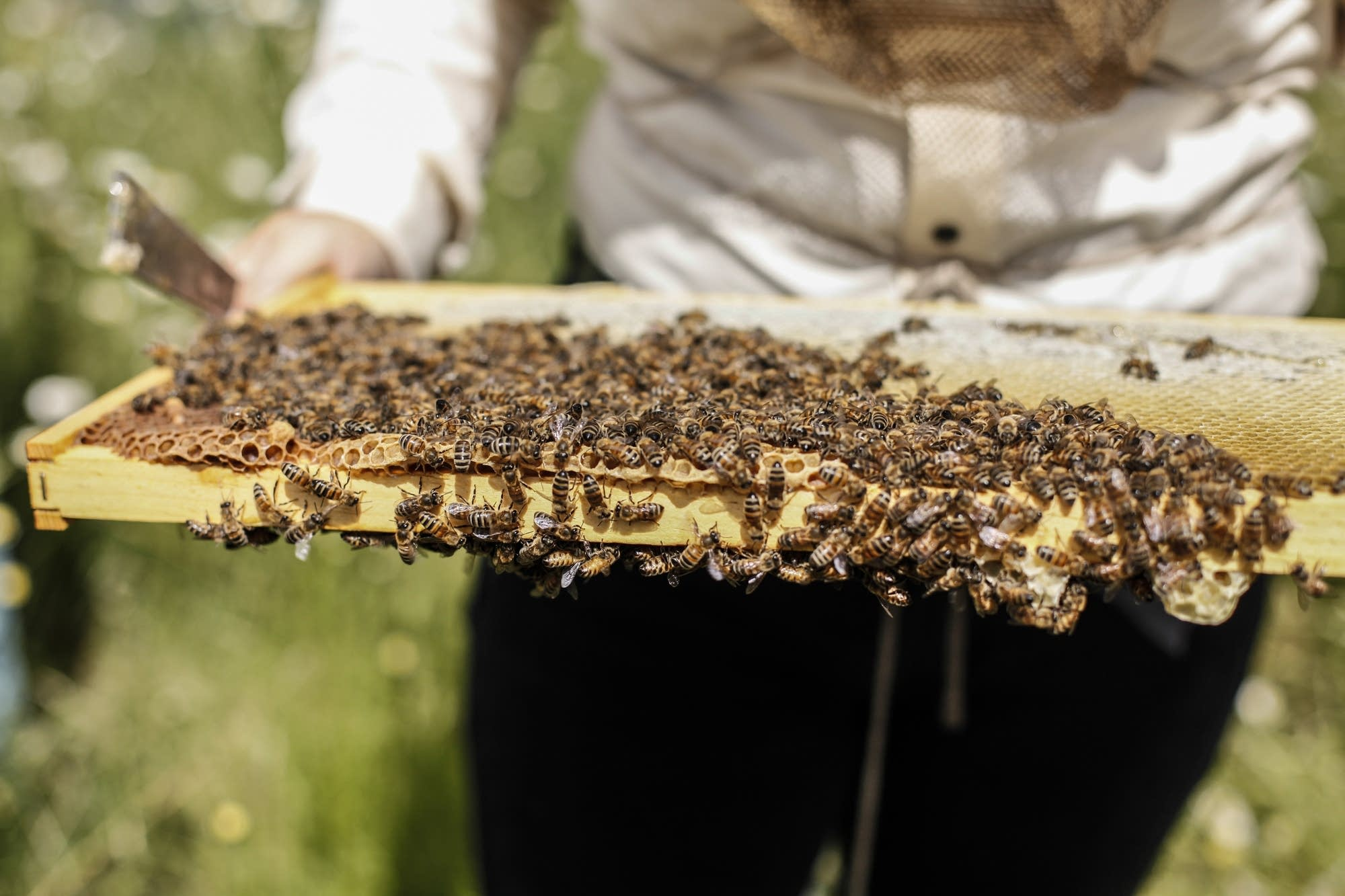 Connexus Energy is now producing honey in Ramsey, Minn.