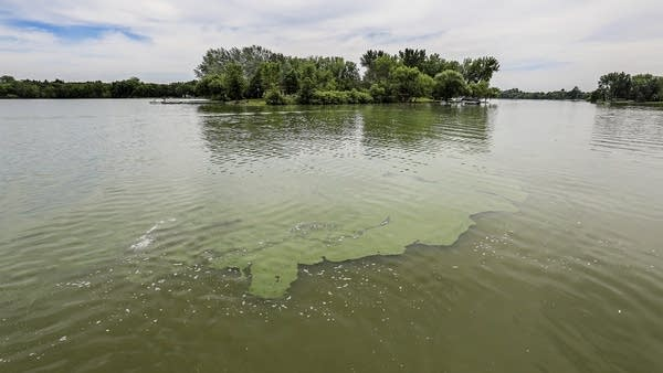 A changing planet is fueling an increase in algae blooms.