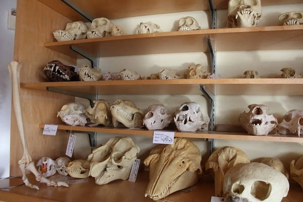 Animal skulls and other scientific items fill the Science House's walls.
