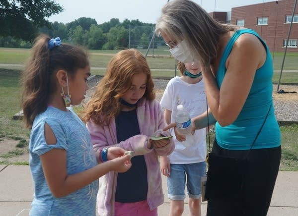 students look for butterfly eggs