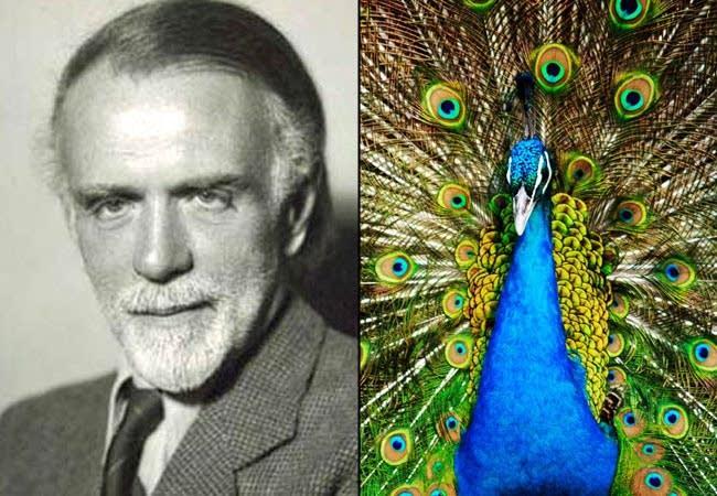 Kodaly and Peacock