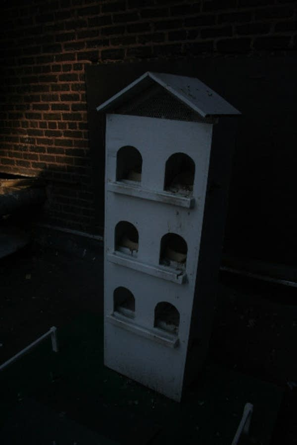 A birdhouse set up by a St. Paul animal control