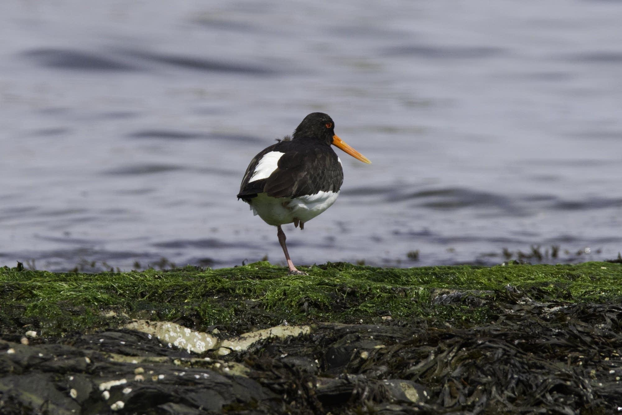 Oslo - 27 - bird on one leg