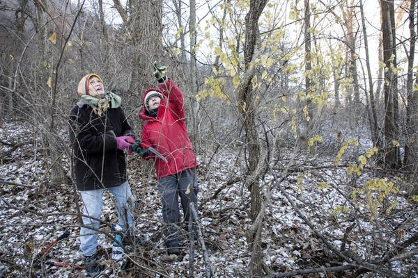 Volunteering for a Winona County Environmental Conservation group.