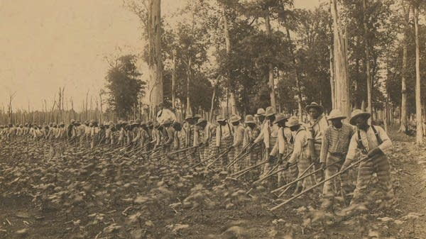 Prisoners hoeing in a field. Parchman, Mississippi.