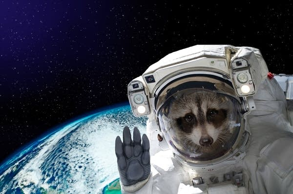 A raccoon dressed as an astronaut in space.