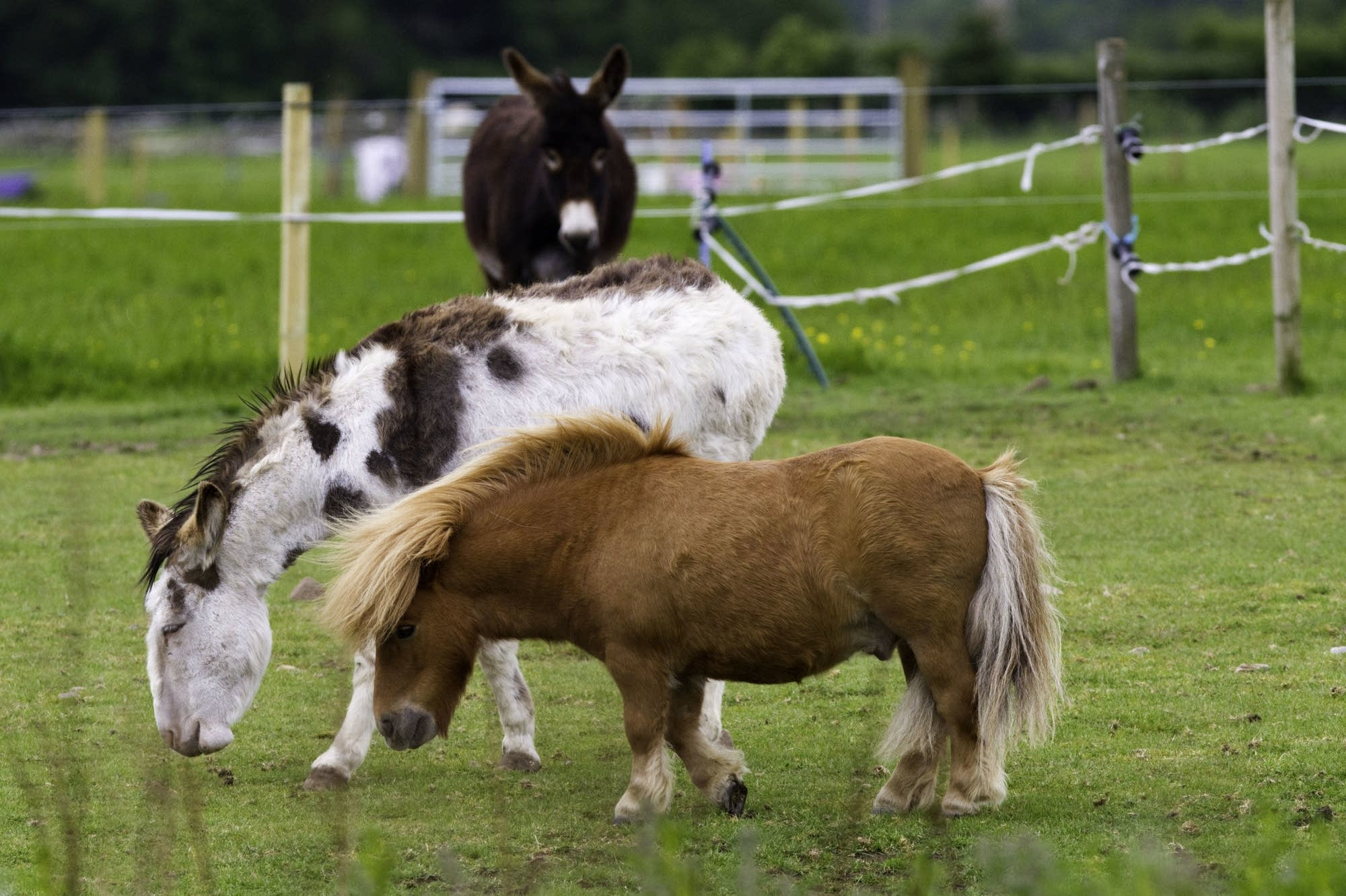 Edinburgh - 33 - Ponies