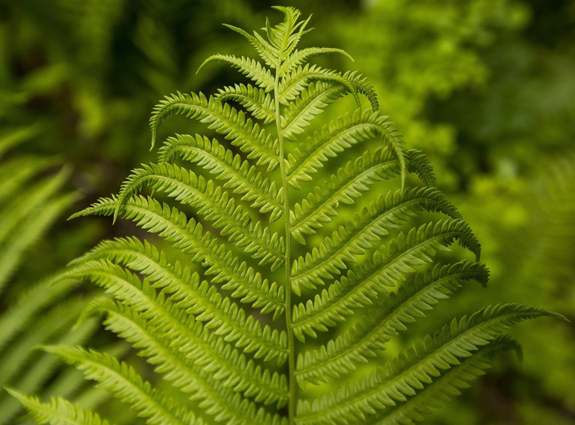 Ferns are abundant along the new section.