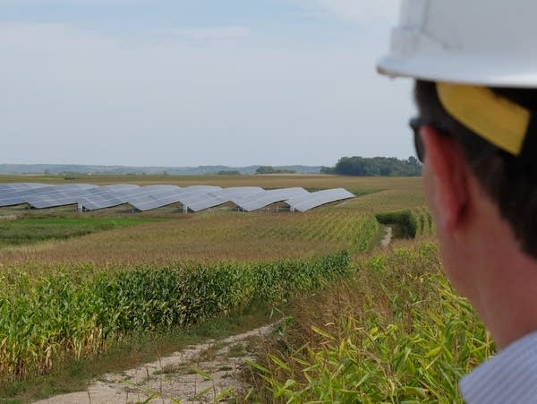 Looking at a solar array in a corn field