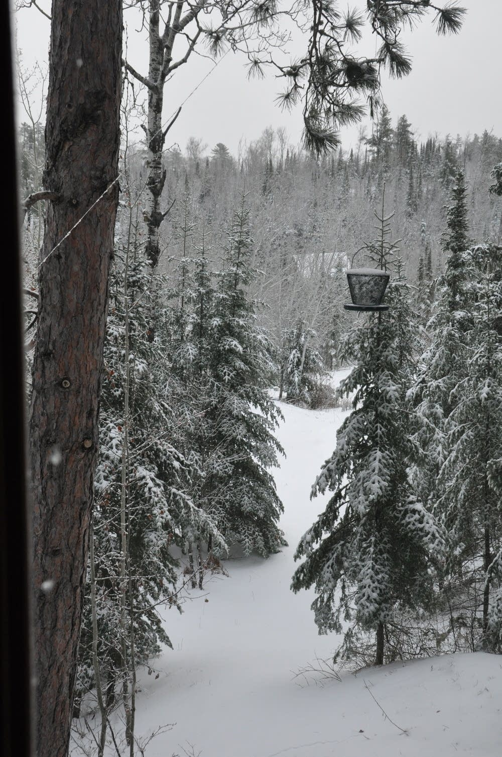 Ely snow